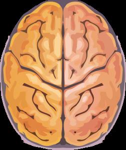 Cérebro: quanto mais se conhece mais inteligente se é, ou pode ser