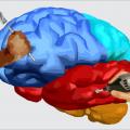 Desenvolver, moldar, lapidar e ou ampliar a inteligência / potencial intelectual e habilidades específicas