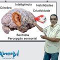 Ensinando a aprender – Cérebro - Inteligência - Habilidades - Criatividade - Sentidos - Percepção sensorial